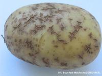 More unknown corky symptoms
