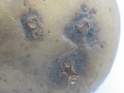 Powdery scab
