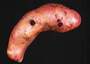 Orifices de limaces